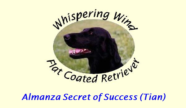 Almanza Secret of Success (Tian)